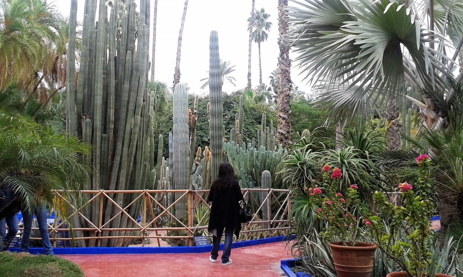 Jardin majorelle ville nouvelle marrakech my feet are for Jardin majorelle 2015
