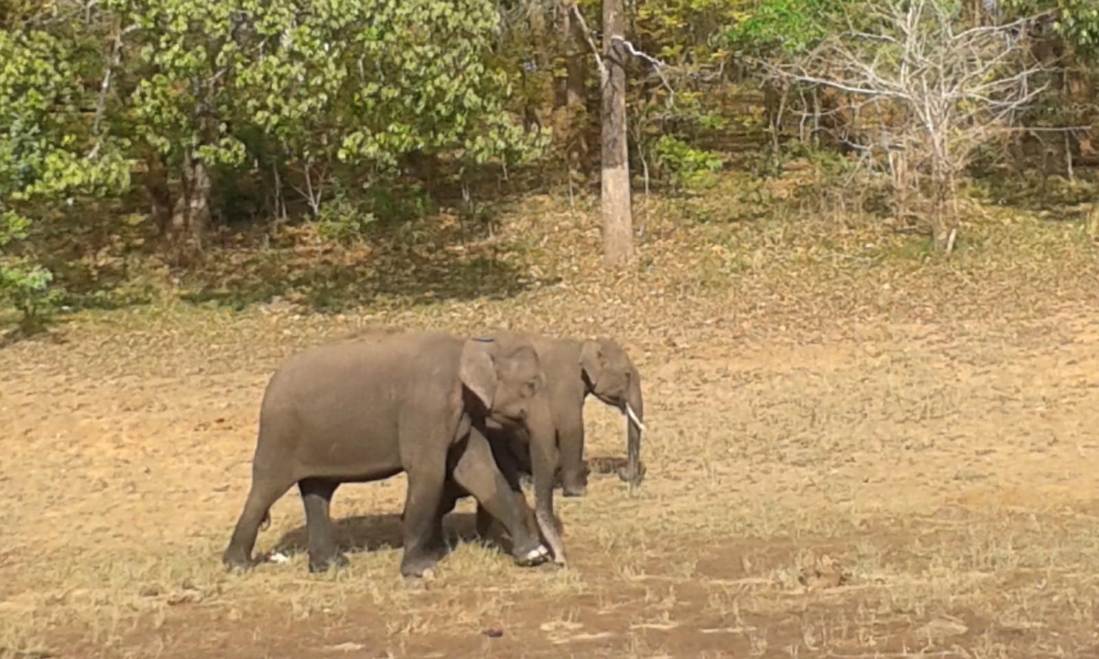 Kerala is different periyar reserve kerala