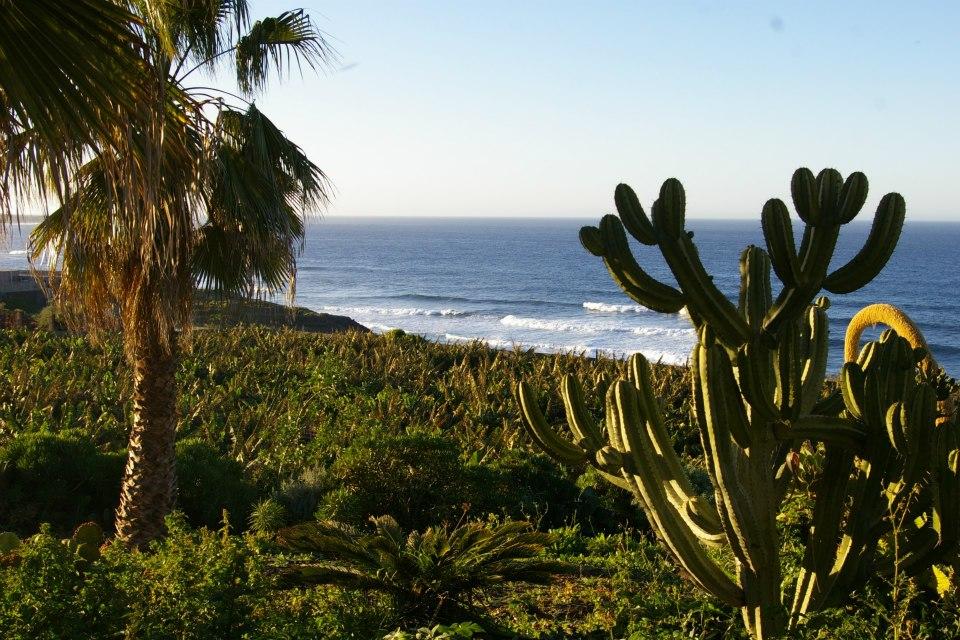 banana plantations garachico