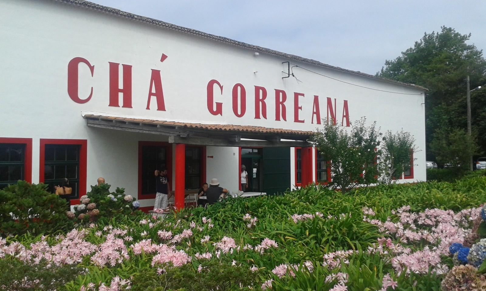 Cha Gorreana Sao Miguel