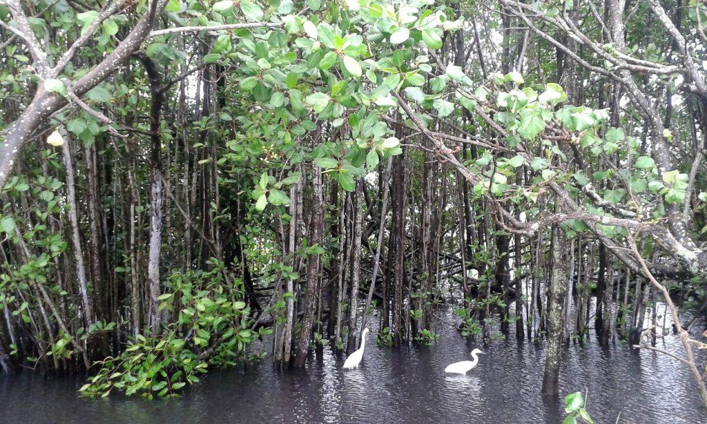 Lagoa Rodrigo de Freitas Rio