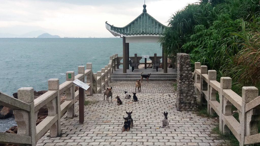 pavillion Lamma island Hong Kong