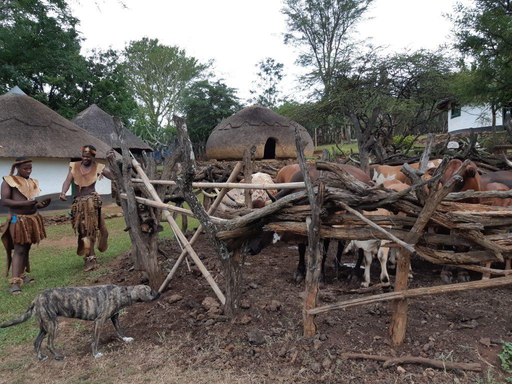 Zulu cattle kraal