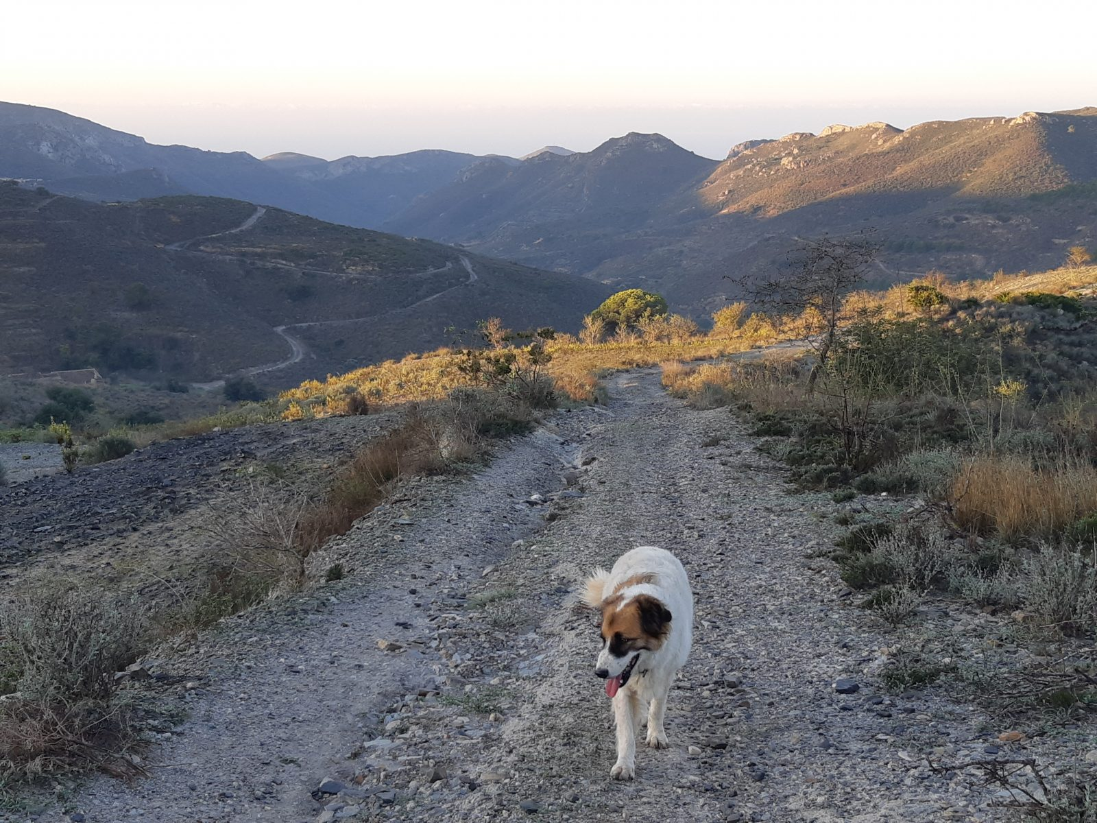 dog sitting in Spain
